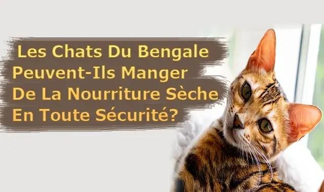 Les Chats Du Bengale Peuvent-Ils Manger De La Nourriture Sèche En Toute Sécurité?