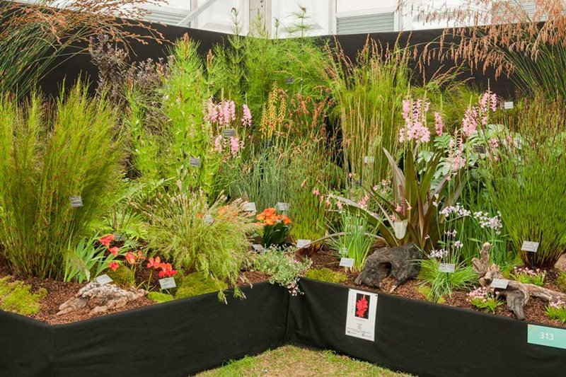 Kelnan Plants