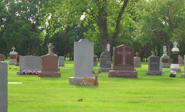 cemitério, assombração, medo, terror, fantasmas, fantasma, demônio, lenda, conto, história aterrorizando, bizarro