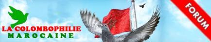 http://pigeonsdumaroc.forumactif.com