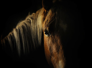 https://www.dreamstime.com/stock-image-horse-eye-dark-image32415711#res1853317