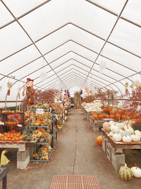 Fall Greenhouse filled with Pumpkins