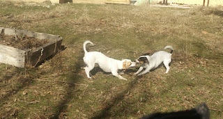 Fighting over a stick