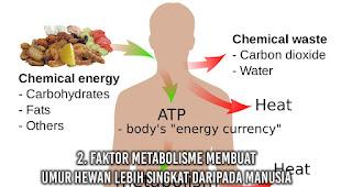 Faktor Metabolisme membuat Umur Hewan Lebih Singkat Daripada Manusia