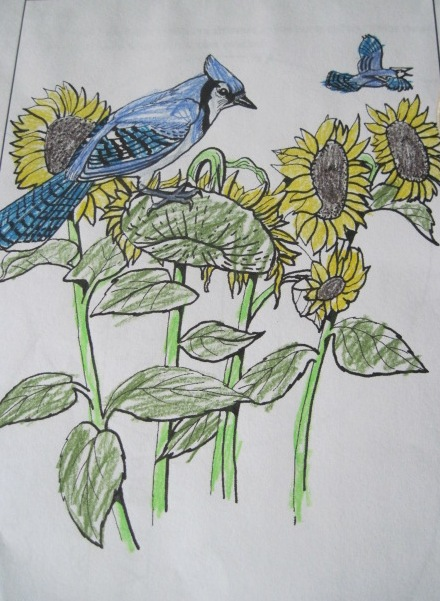 A Childs Garden Summer Bird Study Blue Jays
