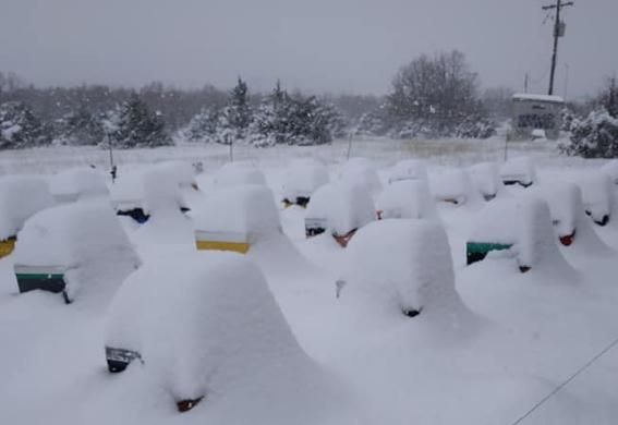 Ισχυρό το κρύο και μελίσσια μέσα στο χιόνι
