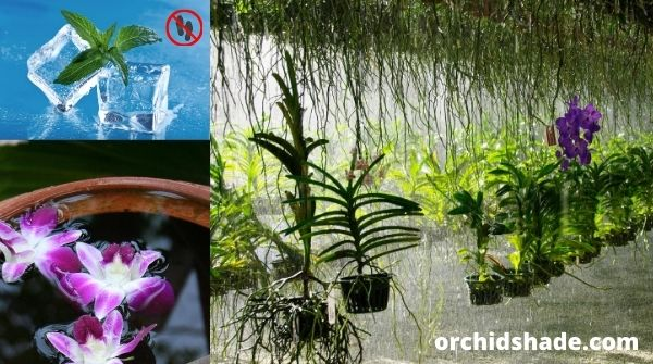 Some expert tips enhance the beauty of orchids.