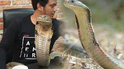 HEBOH ! GARAGA Ular King Cobra Terbesar Di Indonesia Peliharaan Panji Petualang