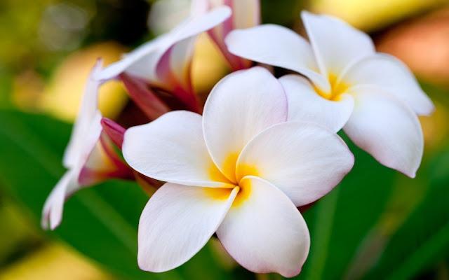 Sắc trắng tinh khôi màu hoa sứ
