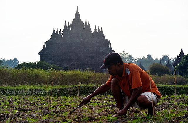 Para petani di dekat Candi Plaosan