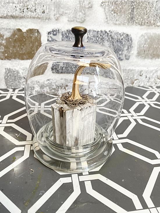 wine glass cloche with pumpkin