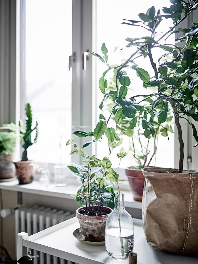 Un rincón con plantas en el comedor