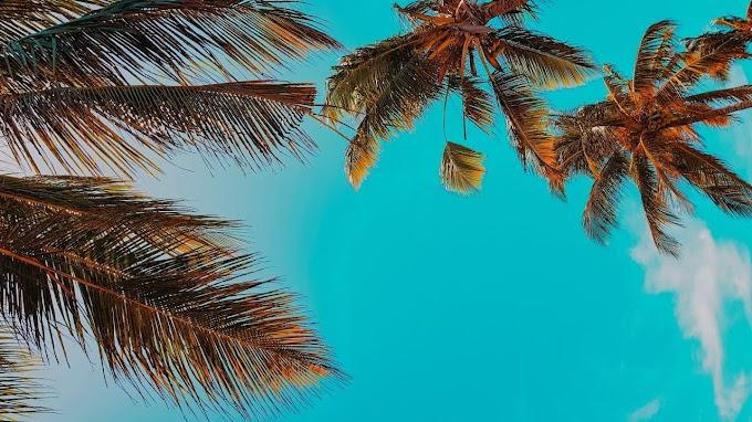 Wake Up & Palm Trees - Free Light Bass Music for Bike Vlogger