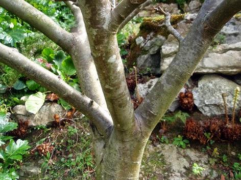 Ramas primarias de un árbol