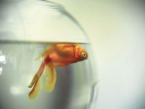 Cara Mengatasi Ikan Yang Sekarat Dengan Tepat