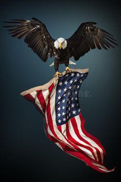 America%2BIndependence%2BDay%2BImages%2B%25287%2529