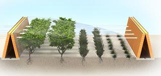 Hutan Buatan Bikin Gurun Jadi Hijau