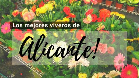 Comprar plantas online en Alicante