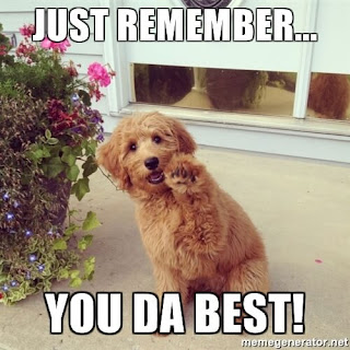 funny you're the best meme dog, you are the best meme cute