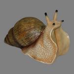 snail in spanish
