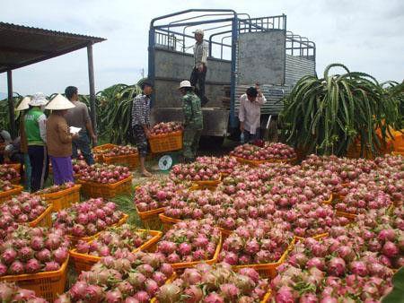 vận chuyển hàng nông sản đi Nha Trang