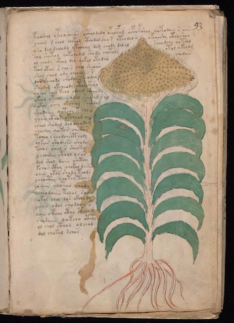 Voynich Elyazması - Bitki