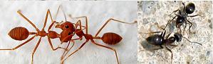 mengapa semut suka berhenti