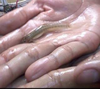 Tips mancing Ikan Kecil