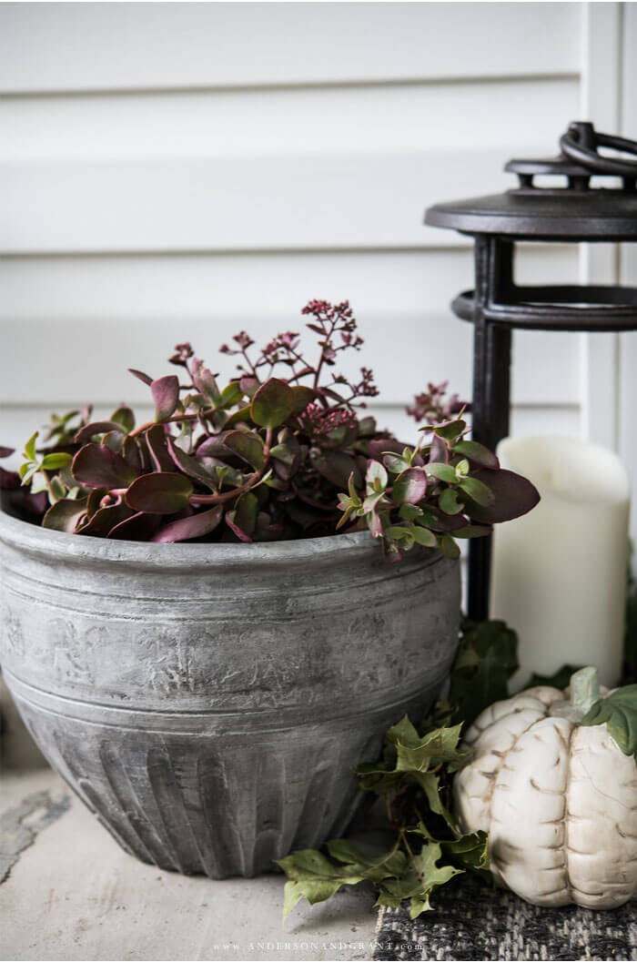 Add the perfect accent of fall on your front porch with seasonal plants