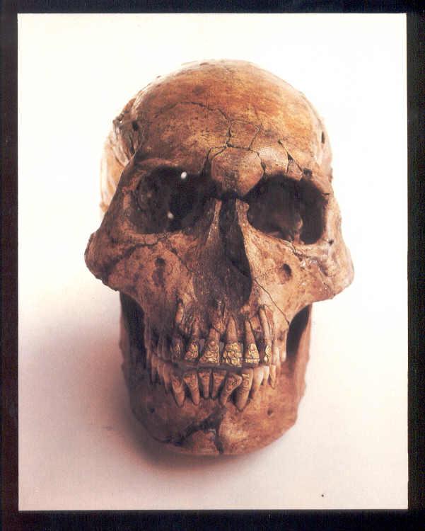 National Museum, Bolinao Skull