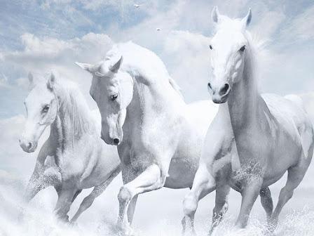 3 जनवरी की सुबह घोड़े से भी तेज दौड़ेगी, इन 6 राशि के लोगों की किस्मत ~  HappyNews