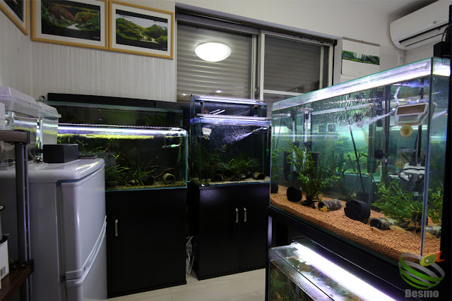 my aquarium room