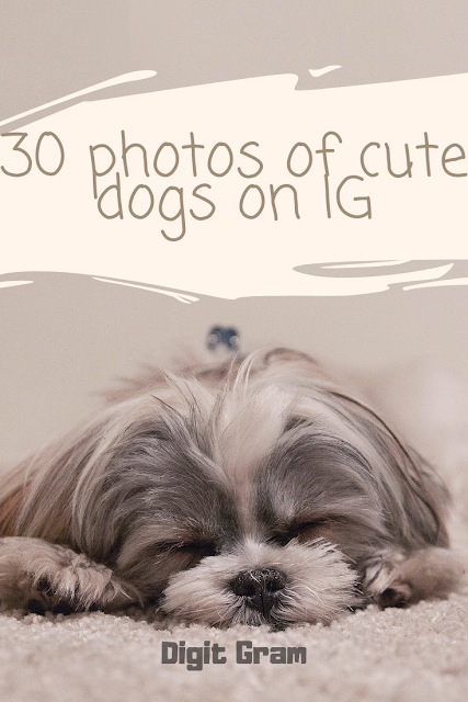 30 photos of cute dogs