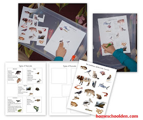 the homeschool den invertebrates vertebrates the five vertebrate groups. Black Bedroom Furniture Sets. Home Design Ideas