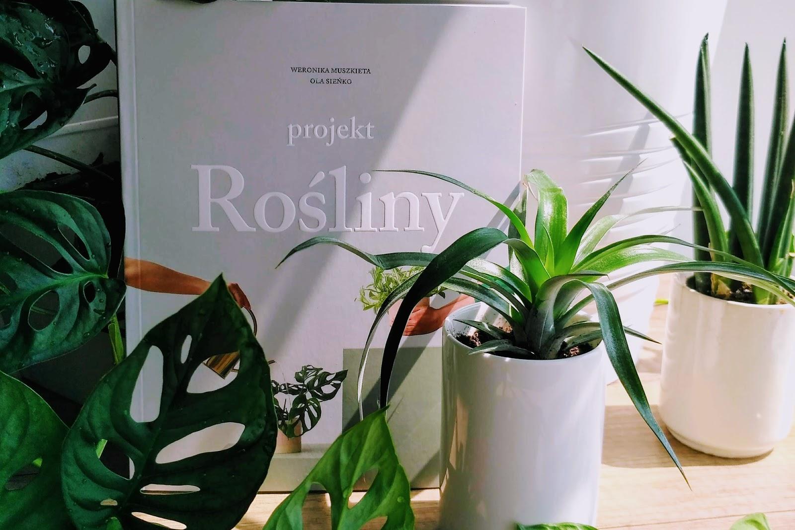 projekt rośliny recenzja
