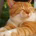 Viral, Kucing di Jepang Selamatkan Nyawa Manusia