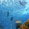 Underwater World and Dolphin Lagoon merupakan salah satu tempat wisata di Singapore yang direkomendasikan Hotelspore.