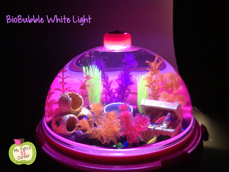 Class pet glofish in a bio bubble christi fultz for Glow in the dark fish tank