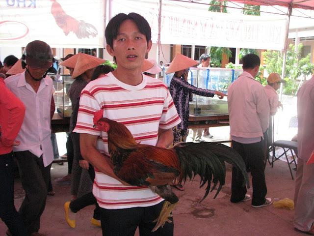 Một chủ gà giới thiệu gà chiến của mình
