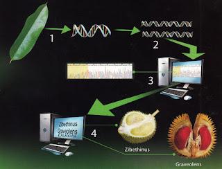 Uji DNA Pelangi