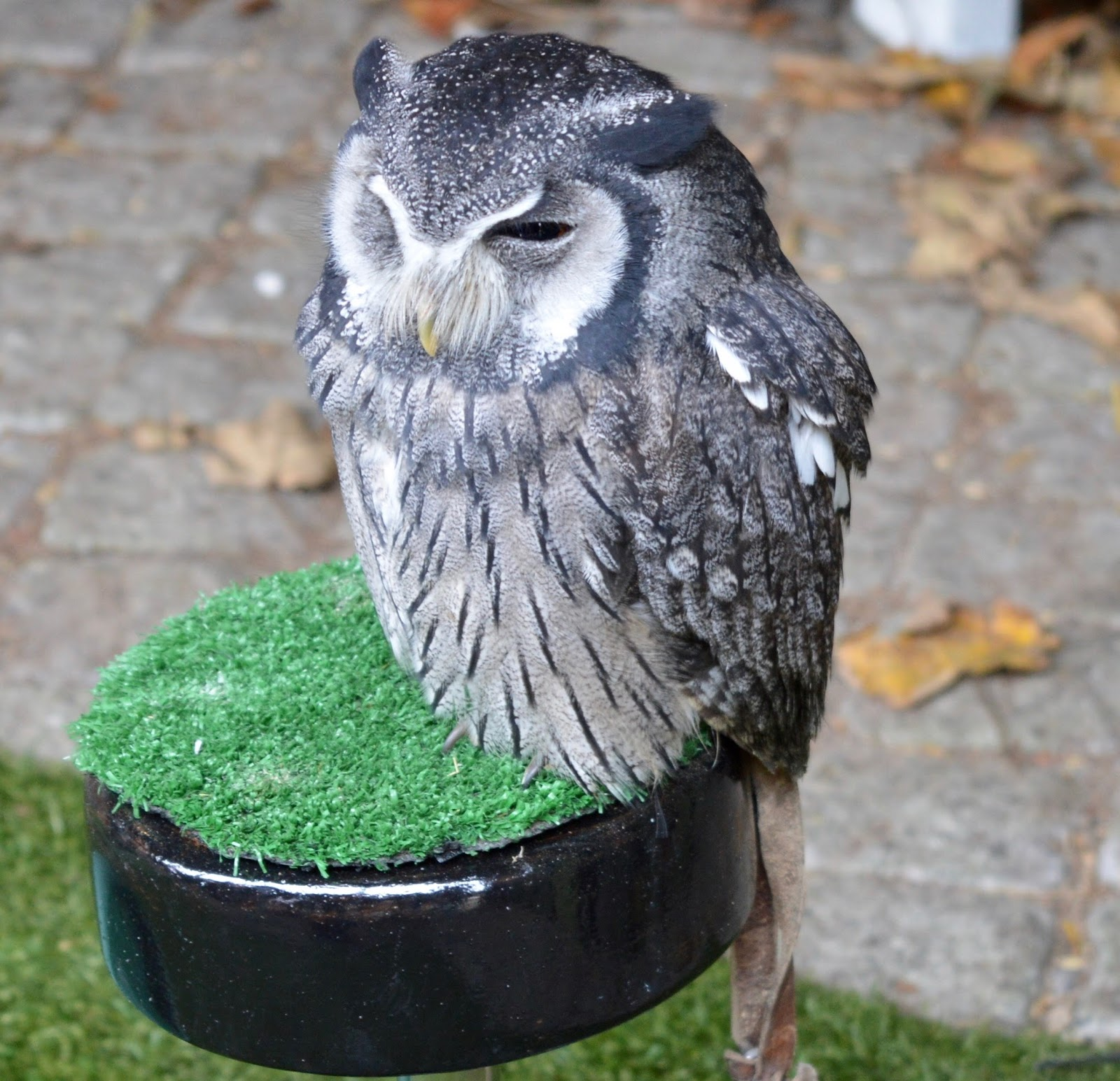 Half Term Hocus Pocus at Preston Park | The North East's very own Diagon Alley - real owl