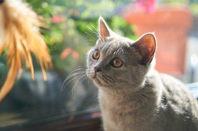 bau-yang-tidak-disukai-kucing