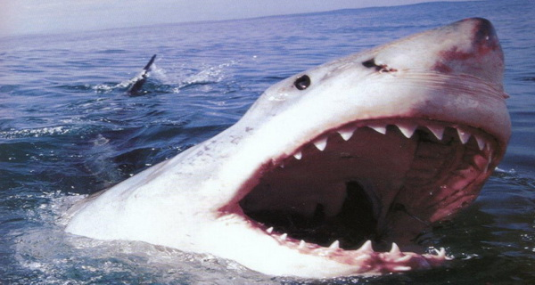 acestea sunt cele mai letale animale din lume