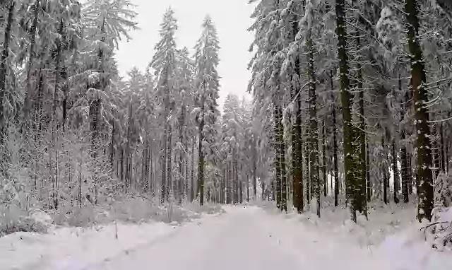 शीतोष्ण मानसून  जलवायु