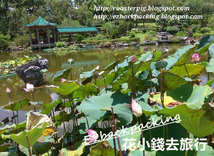 粉嶺康樂公園荷花池