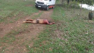 Pai e filho (criança) foram mortos com vários golpes de faca na zona rural de Riachão do Poço