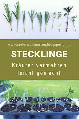 Stecklinge-Pin-Steiermarkgarten