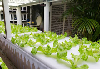 Gardening Indoors With Soil & Hydroponics - Aquaponics and Hydroponics, the Future Urban Agriculture