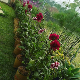 Jasa Pembuatan dan Perawatan Taman di Bandung Jakarta Murah