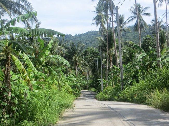 дорога вдоль пальм и зелени